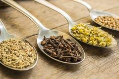 Especias e ingredientes de la infusión de hierbas en las cucharas Fotografía de archivo libre de regalías