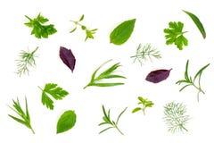 Especias frescas e hierbas aisladas en el fondo blanco Estragón del tomillo de albahaca del perejil del eneldo Visión superior Imagen de archivo libre de regalías