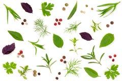 Especias frescas e hierbas aisladas en el fondo blanco Granos de pimienta del tartun del tomillo de albahaca del perejil del enel Imagen de archivo