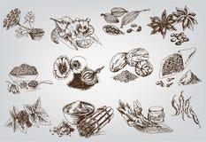 Especias naturales Imagen de archivo libre de regalías