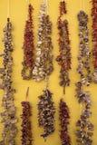 Especias secadas imágenes de archivo libres de regalías