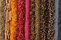 Especias y fondo de las hierbas Diversos condimentos se dispersan en color de las rayas fotos de archivo libres de regalías