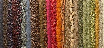 Especias y fondo panorámico de las hierbas los diversos condimentos son sc imágenes de archivo libres de regalías