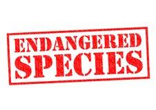 Especie en peligro stock de ilustración