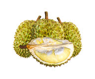 Especie Monthong Tailandia del Durian aislada en el fondo blanco Fotografía de archivo libre de regalías