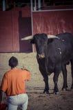 Espectáculo de la tauromaquia, donde una lucha de toro un torero S Fotografía de archivo libre de regalías