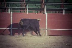 Espectáculo de la tauromaquia, donde una lucha de toro un torero S Imagen de archivo libre de regalías