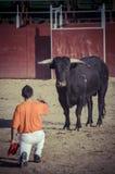 Espectáculo de la tauromaquia, donde una lucha de toro un torero S Fotos de archivo libres de regalías