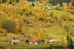 Espectáculo de los campos del amarillo de la naturaleza en otoño Imágenes de archivo libres de regalías