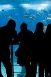 Espectadores Fotos de archivo