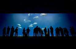 Espectadores del acuario fotos de archivo