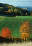 Espectro de color del otoño Fotografía de archivo libre de regalías