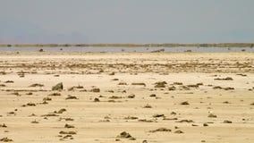 Espejismo en el desierto de Kavir de la rociada-e, Irán almacen de video