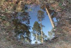 Espejo de la silvicultura Imagen de archivo libre de regalías