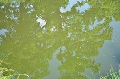 Espejo de madera del agua Foto de archivo