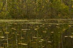 Espejo del pantano imagen de archivo libre de regalías