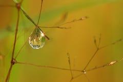 Espejo natural en gota Foto de archivo libre de regalías