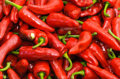 Espelette Peppers Stock Image