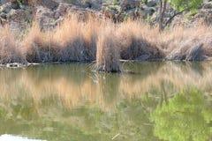 Espelhando a água Imagem de Stock Royalty Free