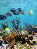 Espelho do fundo do mar Foto de Stock