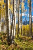 Espen in Butte mit Haube Lizenzfreie Stockbilder