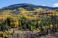 Espen entlang der Junggeselle-Schleife, Creede Colorado Stockbild