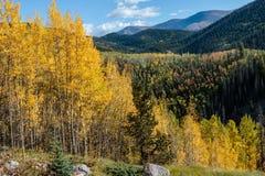 Espen entlang der Junggeselle-Schleife, Creede Colorado Stockfoto