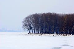 Espen im Winter Lizenzfreies Stockbild