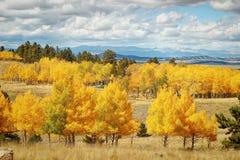 Espen in Rocky Mountains Stockbilder