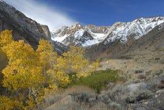 Espen in Siërra de bergen van Nevada Royalty-vrije Stock Foto's