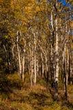Espen Wald im Fall Stockbild