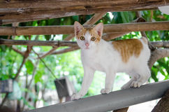 Espera da espera dos gatos Fotografia de Stock Royalty Free