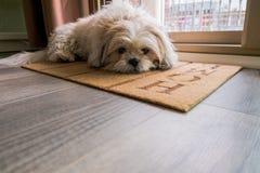 Espera do cão Foto de Stock