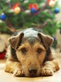Espera larga para la Navidad Imagen de archivo libre de regalías