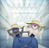 Espera linda del perro y del gato en el aeropuerto con la maleta azul imagen de archivo libre de regalías
