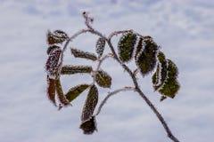 Esperança congelada Fotografia de Stock Royalty Free