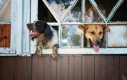 Esperando o proprietário! Foto de Stock