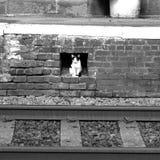 Esperando um trem na estação Foto de Stock