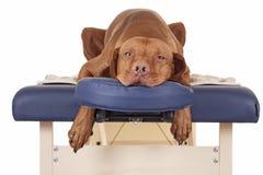 Esperar mi masaje Imagen de archivo libre de regalías