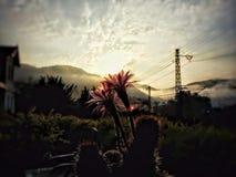Esperar una mañana Fotos de archivo