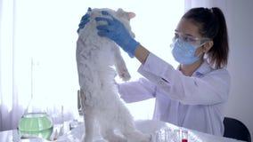 Esperimenti sugli animali, droga di prova del tecnico di laboratorio e vaccini sull'animale archivi video