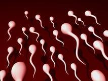 Esperma imágenes de archivo libres de regalías