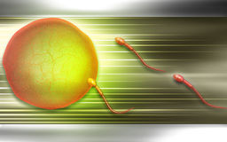 esperma Fotos de archivo