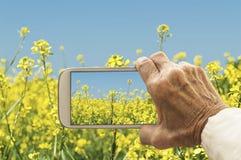 Esperto che prende fotografia del giacimento di fiori del seme di ravizzone del seme oleifero Immagini Stock Libere da Diritti