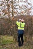 Esperto durante l'esame degli alberi per un'infestazione possibile del parassita dallo scarabeo longhorned asiatico fotografia stock libera da diritti