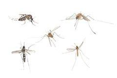 Esperto in informatica dell'errore di programma della zanzara dell'insetto Fotografia Stock Libera da Diritti