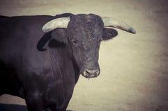 Espetáculo da tourada, onde uma luta de touro um toureiro S Foto de Stock