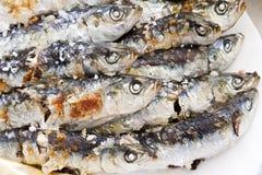 Espeto de sardinas. Typical Spanish fish eating in Málaga, Spain asked espeto de sardinas Stock Image