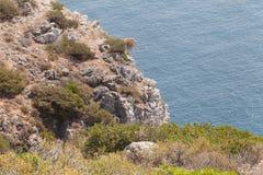 Espichel cape, Portugal. Coast, vegetation and cliffs, atlantic ocean stock image