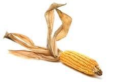 Espiga de milho Foto de Stock